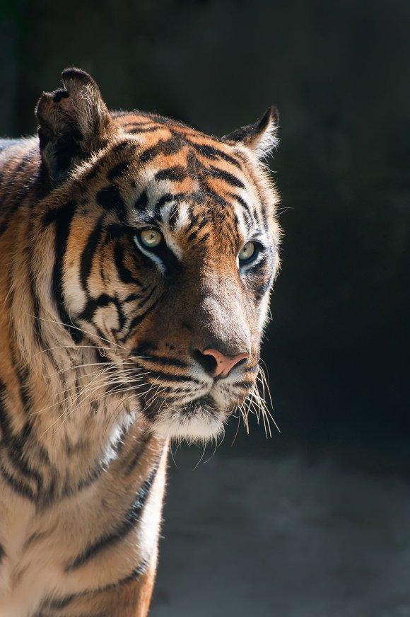 zoo_jihlava010