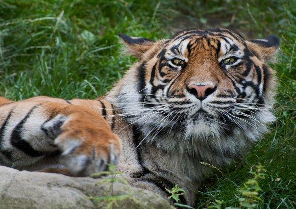 zoo_jihlava011