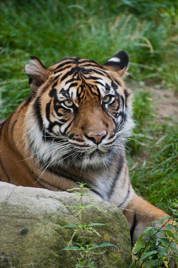 zoo_jihlava012