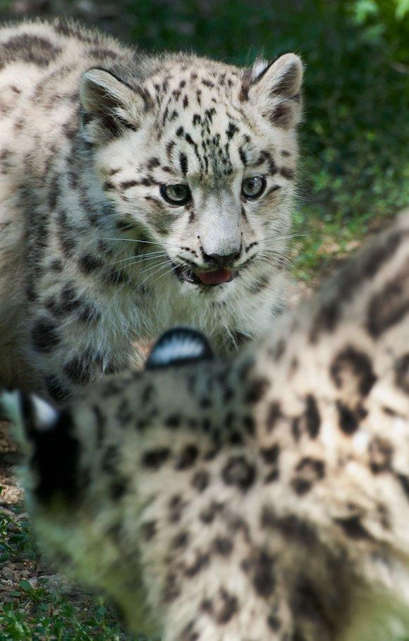 zoo_jihlava019