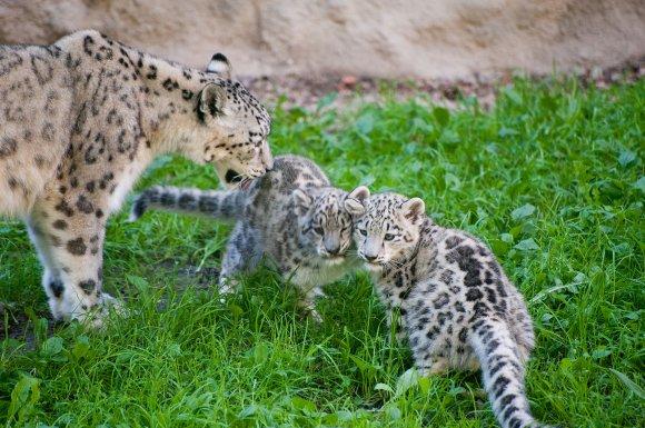 zoo_jihlava023