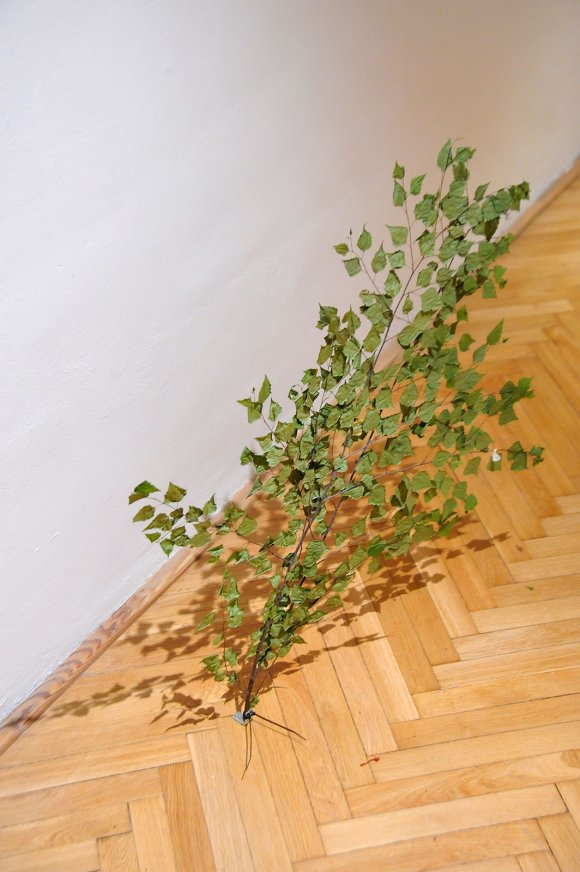 tree007