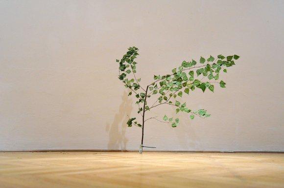 tree008