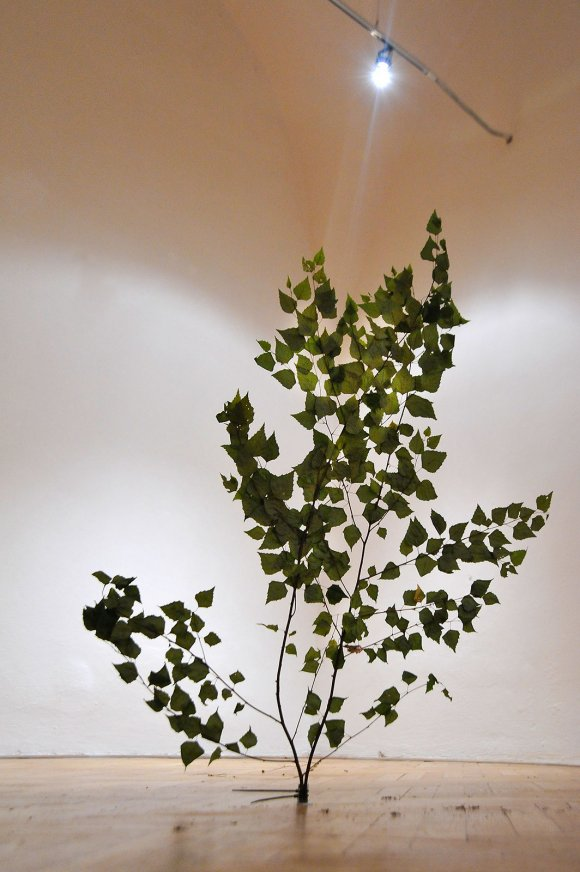 tree009