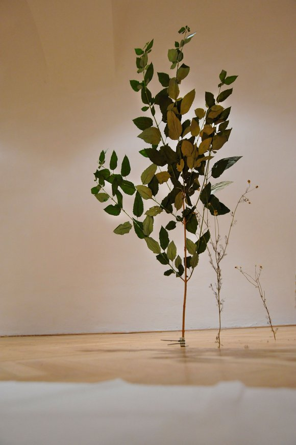 tree012