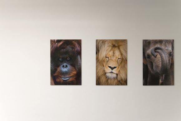 zoo_vystava011