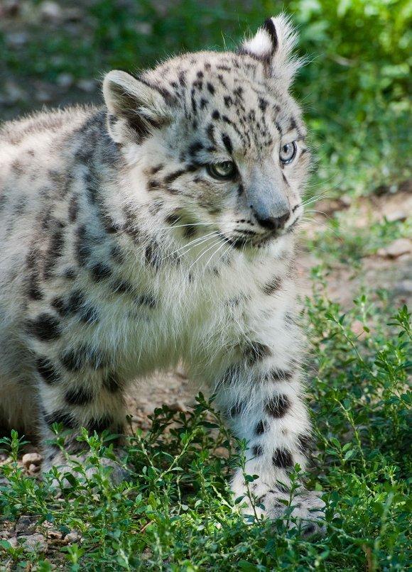 zoo_jihlava018