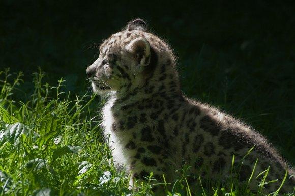 zoo_jihlava021