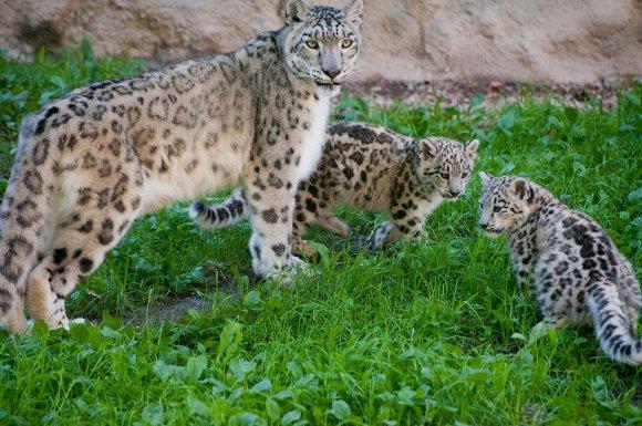 zoo_jihlava022