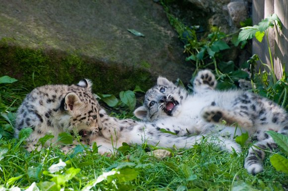 zoo_jihlava024