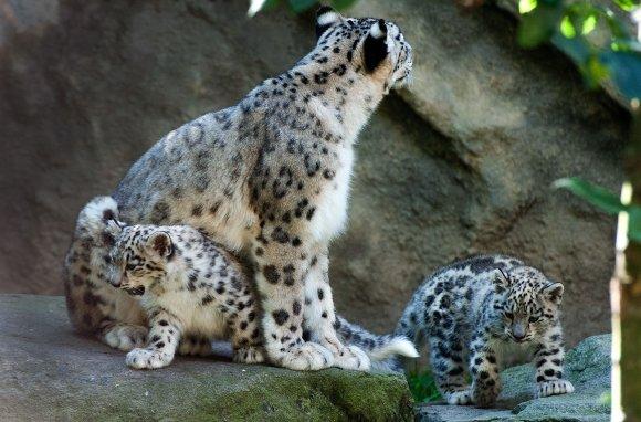 zoo_jihlava025
